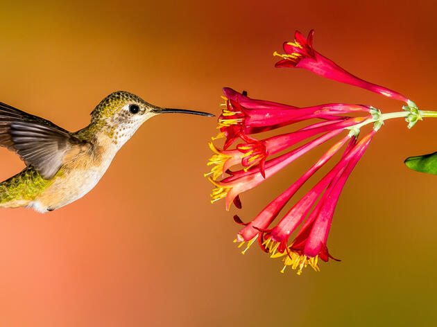 Turn Your Yard Into A Hummingbird Spectacular