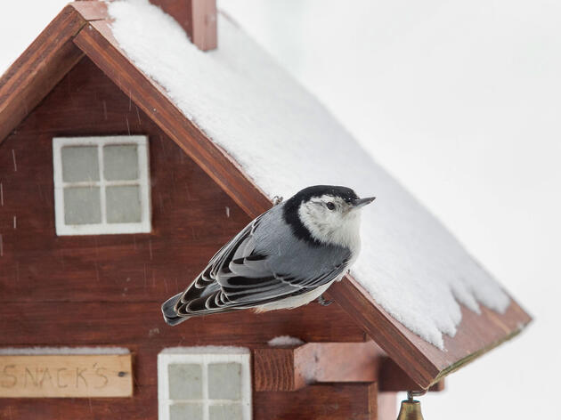 A Record-breaking Year for the Great Backyard Bird Count