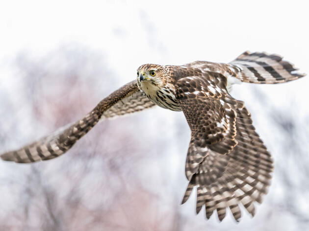 Bipartisan Bill in U.S. House Seeks to Reduce Bird Collisions with Federal Buildings