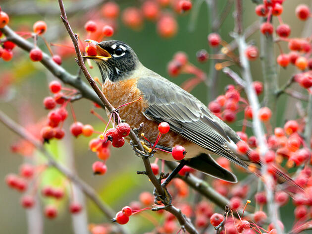 This Weekend, Try Birding by Tree