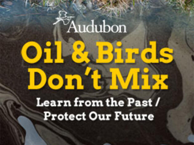 Audubon Website Drips in Oil to Mark 2nd Anniversary of BP Spill in the Gulf
