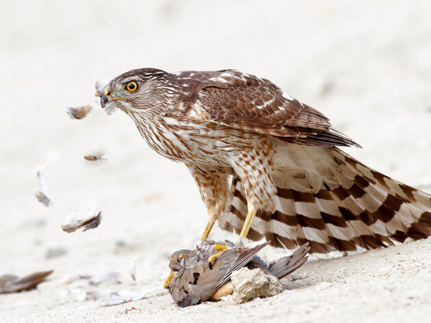 Here's How Much Food Three Different Birds Need to Eat Daily