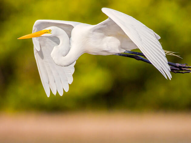 Audubon's Advocacy Is Needed Now More Than Ever