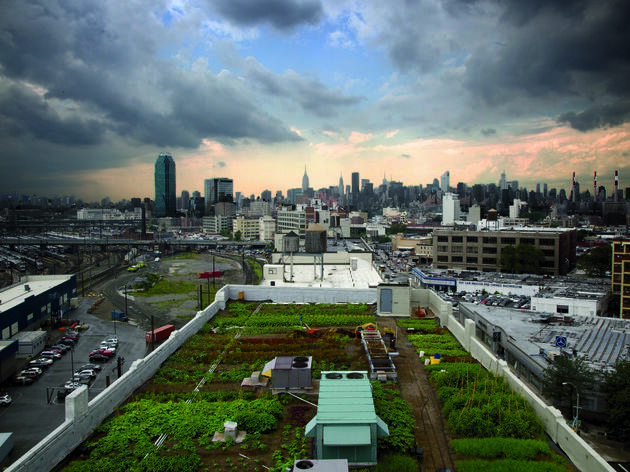 Urban Farms Sprout Across the Country