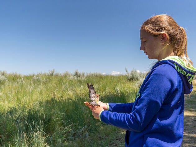 Banding Birds at 12 Years Old