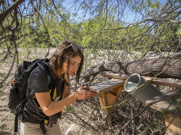 Arizonians Are Helping a Desert Warbler Expand Its Housing Options