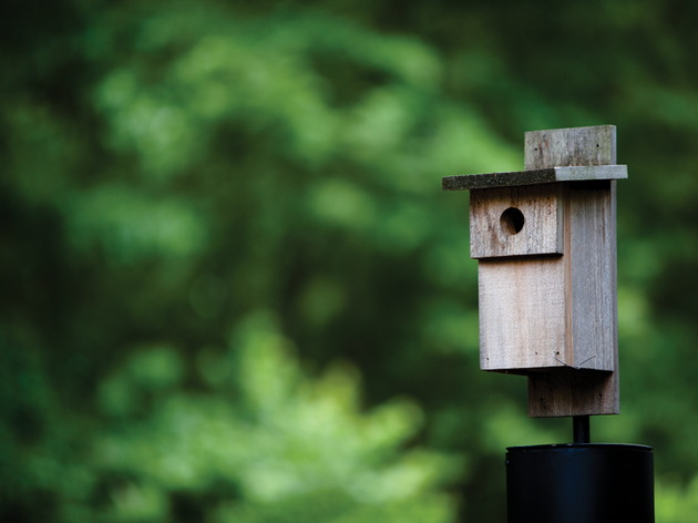 DIY: Build a Bluebird Box