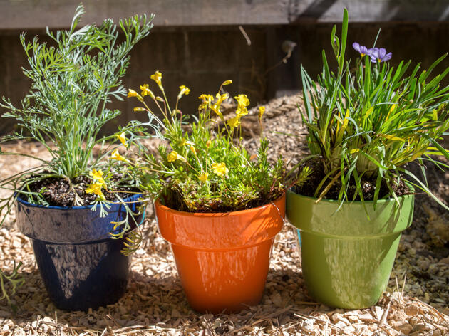 Brighten Up Your Balcony or Patio with a DIY Native-Plant Garden