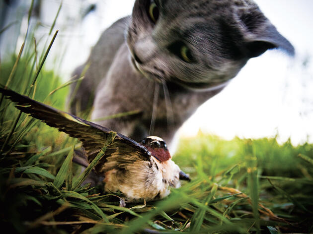 Cat Owners Turn a Blind Eye to Pets' Violence