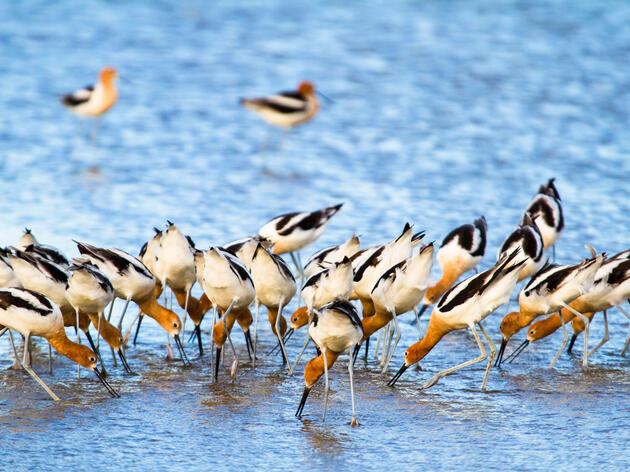 Hear the Commotion of Thousands of Birds on Texas's Bolivar Peninsula
