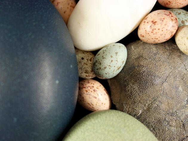 Birds Inherited Colorful Eggs From Dinosaurs