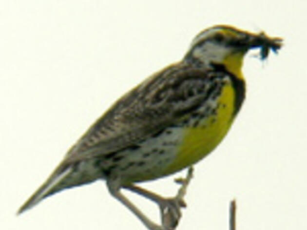 Alarming Declines Among Many Common Birds