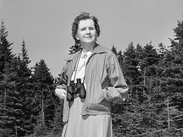 Seven Women Who Made the World Better for Birds and People