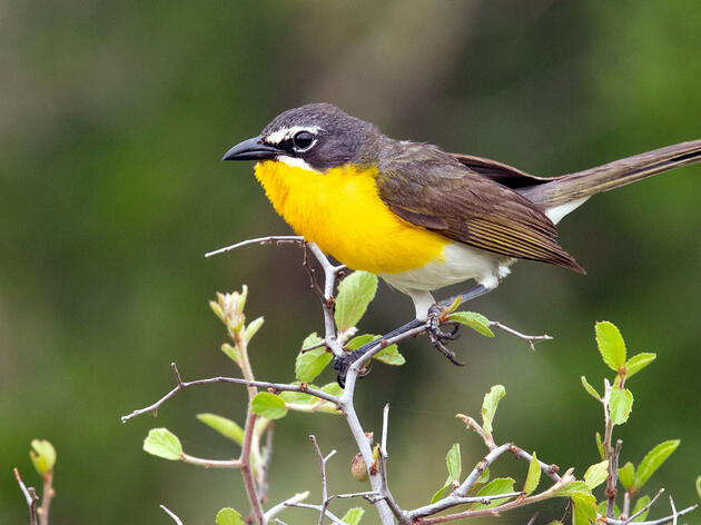 Western Rivers Bird Count Cancelled Until Next Year