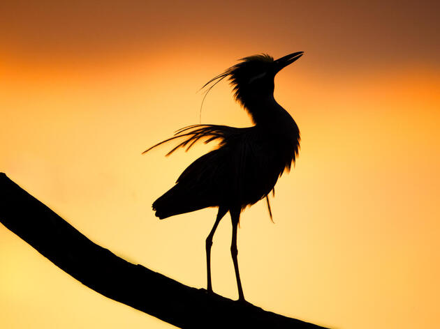 Audubon South Carolina Stands Up for the Conservation Bank