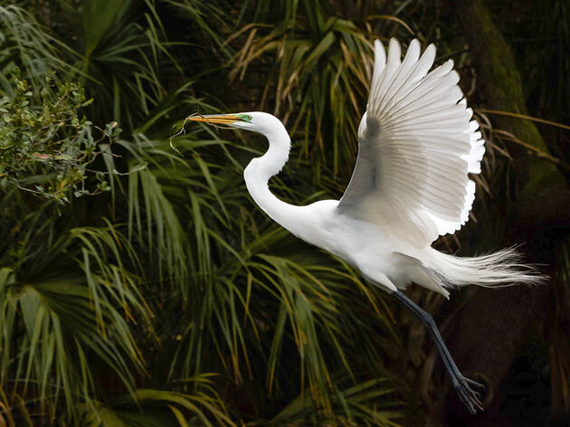 After 100 Years, Widespread Support Affirms the Migratory Bird Treaty Act