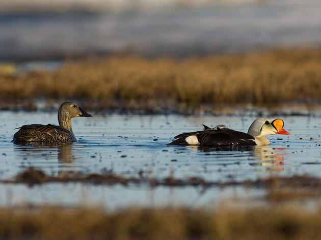 Government Agencies Skirmish Over Inaccurate Environmental Impact Report on Arctic Refuge Drilling