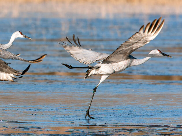 Audubon: Decision to Block the Keystone XL Pipeline Is Good for Birds and People