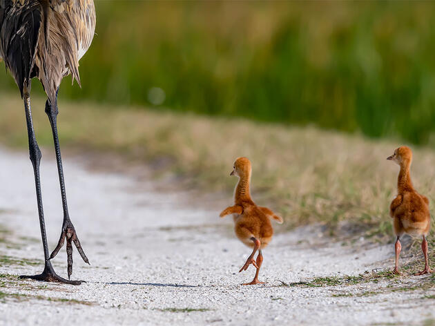 15 Awww-Inspiring Photos of Baby Birds