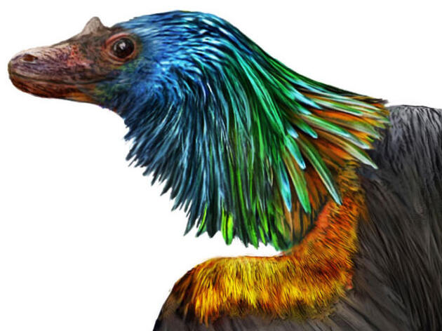 This Newly Discovered Dino-Bird Sported Flashy, Iridescent Feathers