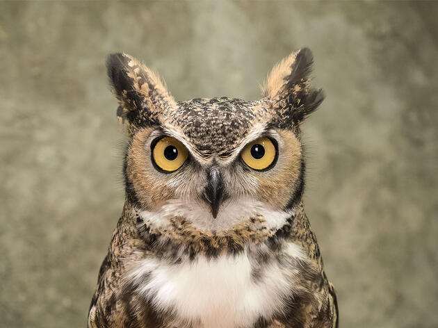 Watch: Oden and Scooter, a Chatty Pair of Charmers, Are Your New Favorite Owls