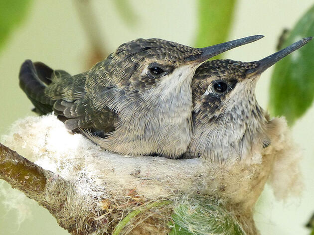 What Do Birds Use To Duct Tape Their Nests Together?