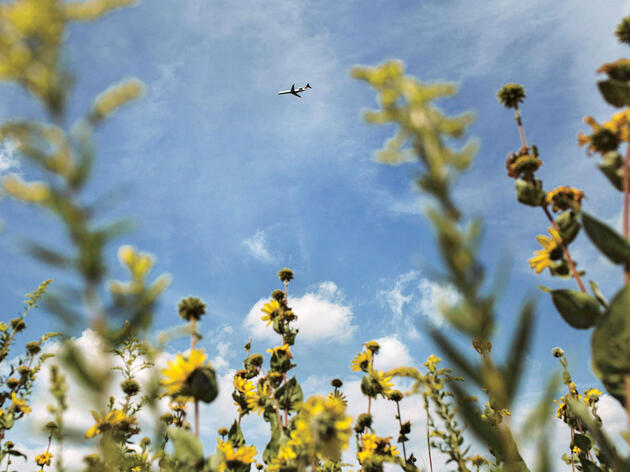 On a Patch of Ohio Prairie, Aviation and Conservation Collide