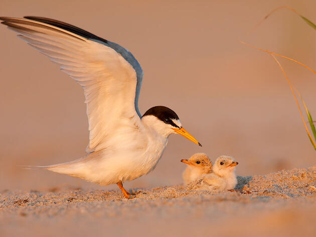 U.S. House Passes Coastal Resilience Bill That Will Benefit Birds and People