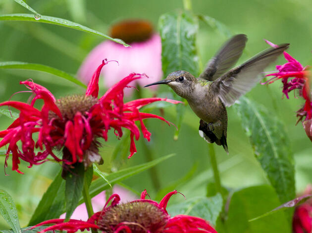 Transform Your Yard and Community Into an Oasis for Birds & Insects