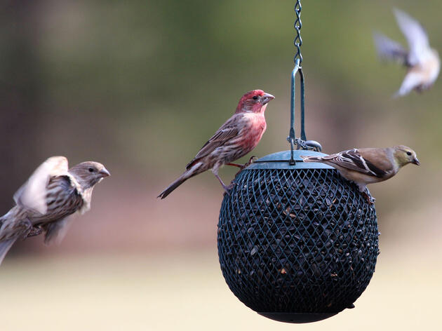 Counting is Caring: Join the Great Backyard Bird Count