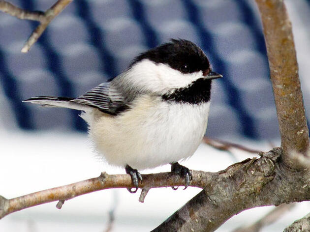 Why Solar Power Is Good for Birds