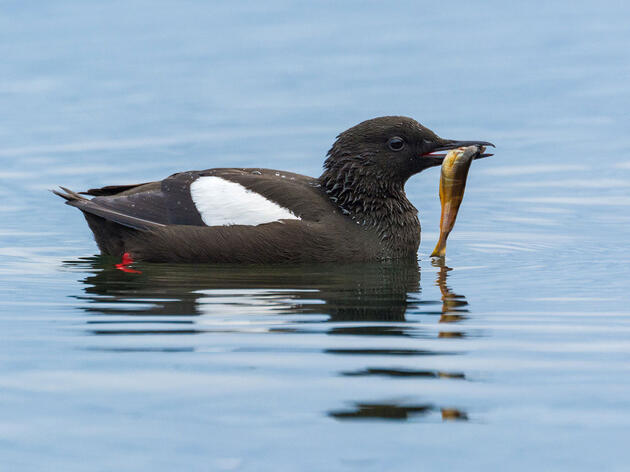 Six Tips for Photographing Birds from Boats