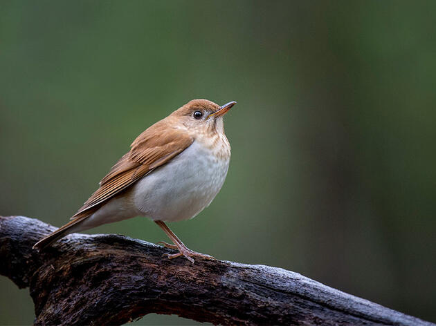Are These Birds Better Than Computers at Predicting Hurricane Seasons?