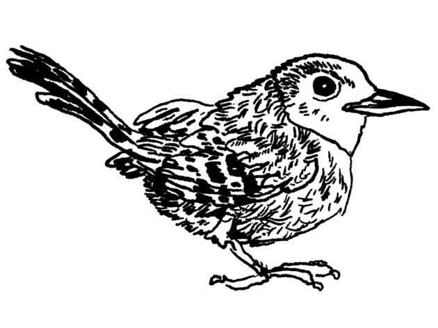 The House Wren: The Unjustly Accused