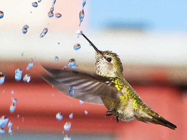 How to Get Hummingbirds to Come to Your City