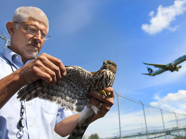 Seattle's Biggest Airport Has an Uber for Its Raptors