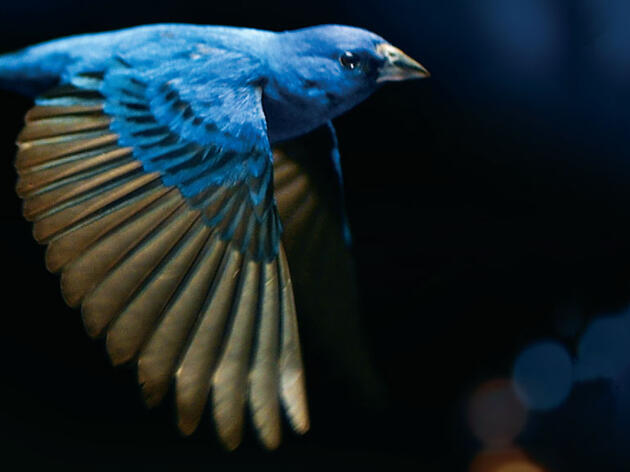 Birds Ring the Environmental Alarm—and Inspire Action—in New Documentary