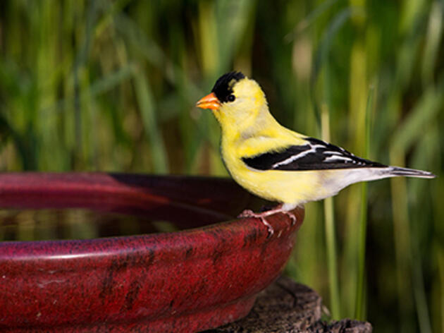 How to Make a Birdbath