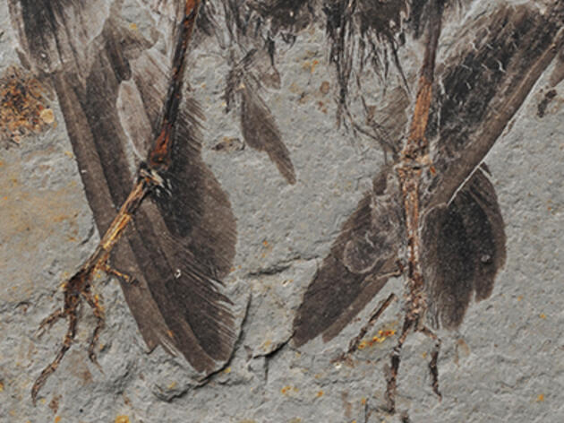 Ancient Chinese Fossil Linked to Modern Birds
