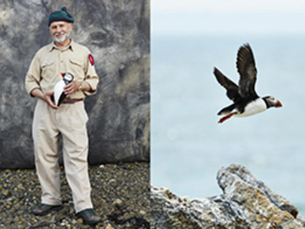 A Crazy Idea to Bring Back Atlantic Puffins Is a Success