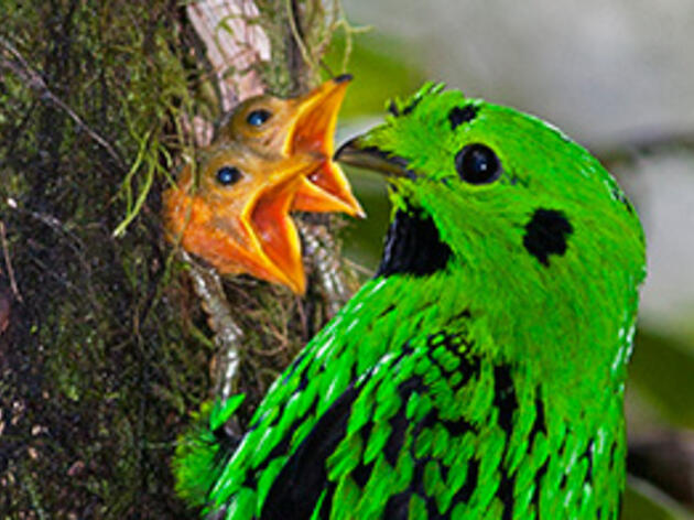 Why Do Tropical Birds Have Fewer Chicks?