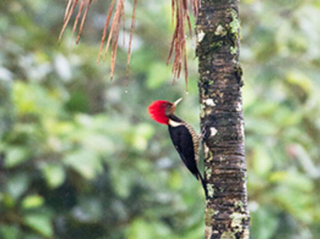 A Woodpecker Disguised as . . . Another Woodpecker?