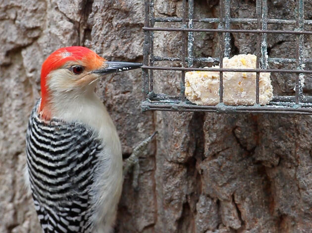 Make Your Own Suet