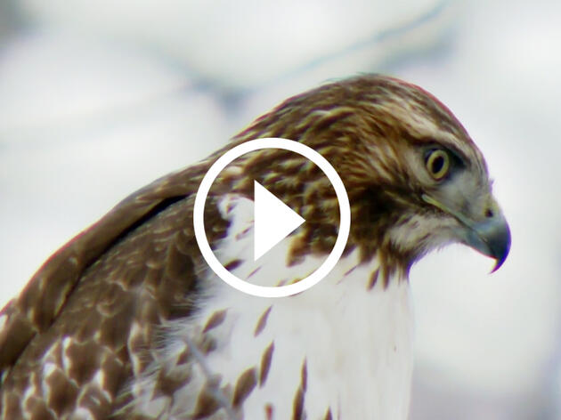 Watch: Vice News Tonight Goes on an Audubon Christmas Bird Count