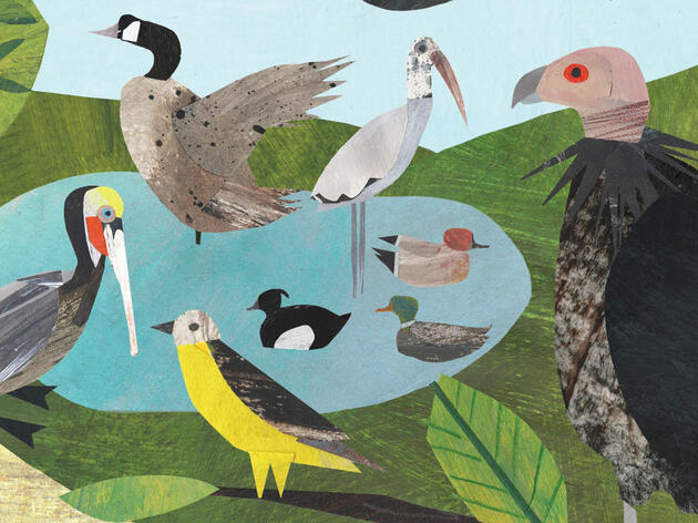 Ten Birdy Children's Books to Read With Your Fledglings