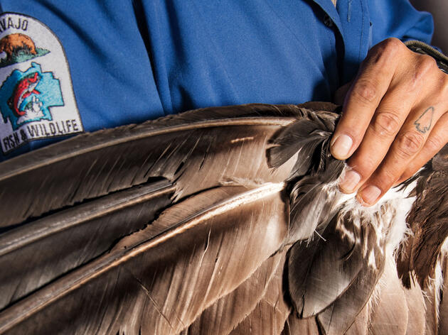 Native American Demand Is Driving a Black Market for Eagle Feathers