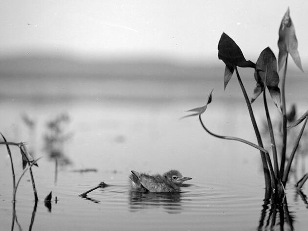 These Century-Old Photos Inspired Some of the West's First Bird Refuges