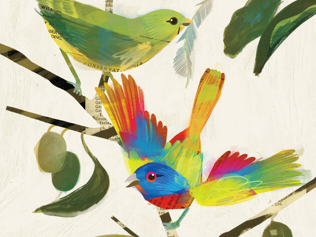 Reimaginando al colorín sietecolores de John James Audubon