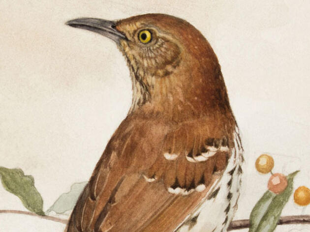 How to Go From Watching Birds to Drawing Them