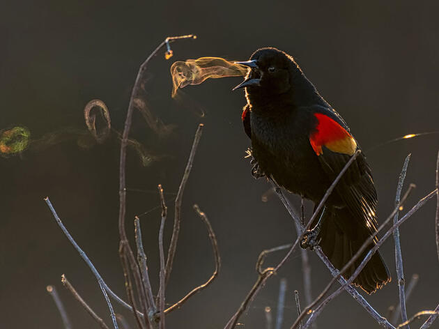 The 2019 Audubon Photography Awards Winners